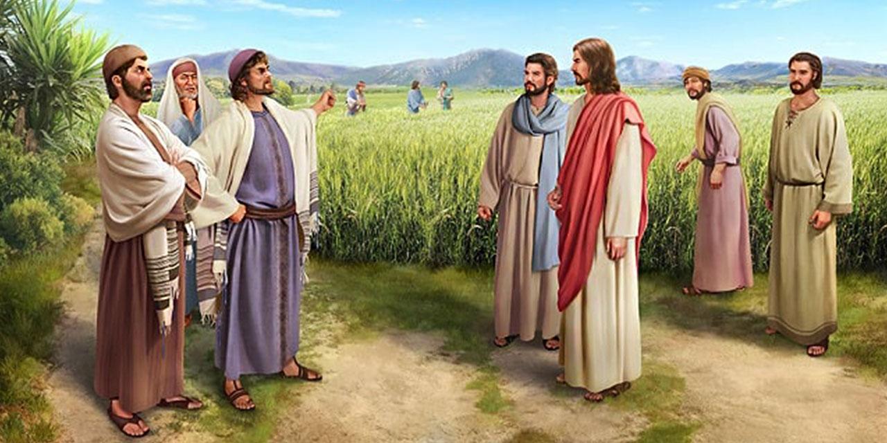 Ученики Иисуса Христа срывают колосья