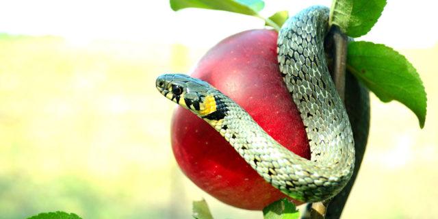Змей соблазняет еву ветхий завет Библия