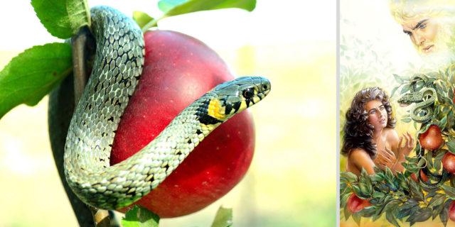 Змей был хитрее всех зверей полевых, которых создал Господь Бог Бытие Ветхий завет Библия