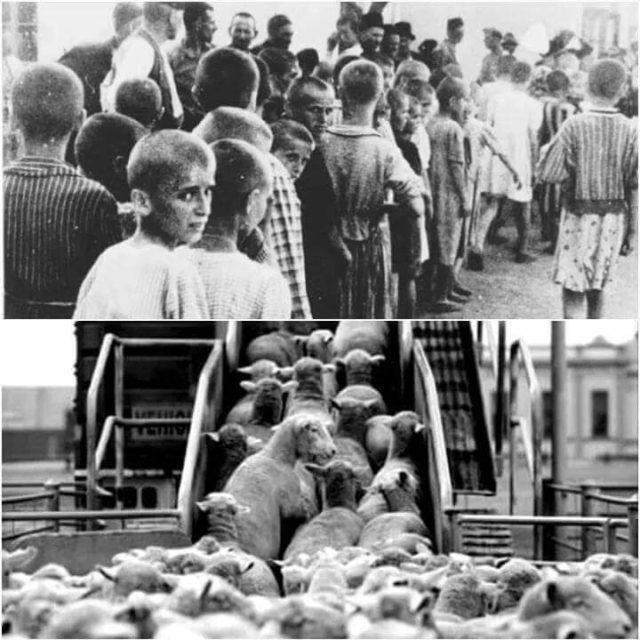 Фашизм или геноцид живых существ #ВЕГЕТАРИАНСТВО #ВЕГАН #ВЕГАНСТВО #ВЕГЕТАРИАНЕЦ #GoVegan #ХРИСТОЛЮБ — christolube.ru