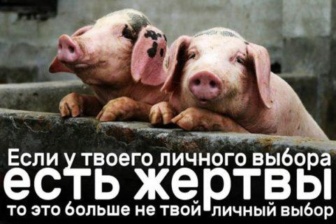 Есть животных — это мой личный выбор #ВЕГЕТАРИАНСТВО #ВЕГАН #ВЕГАНСТВО #ВЕГЕТАРИАНЕЦ #GoVegan #ХРИСТОЛЮБ — christolube.ru