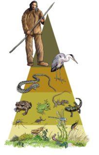 Люди — самый умный вид живых существ #ВЕГЕТАРИАНСТВО #ВЕГАН #ВЕГАНСТВО #ВЕГЕТАРИАНЕЦ #GoVegan #ХРИСТОЛЮБ — christolube.ru