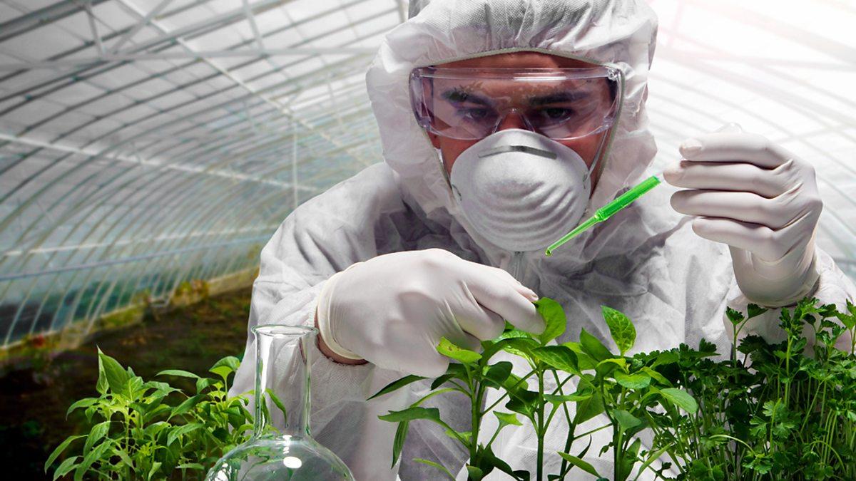 Выращивание сои вредит окружающей среде #ВЕГЕТАРИАНСТВО #ВЕГАН #ВЕГАНСТВО #ВЕГЕТАРИАНЕЦ #GoVegan #ХРИСТОЛЮБ — christolube.ru