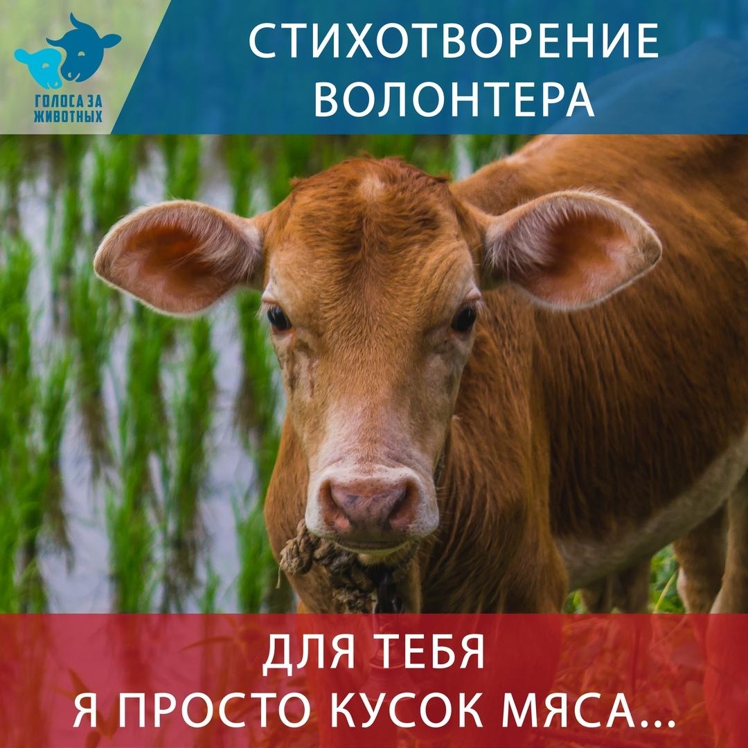 Стихотворение волонтёра #ВЕГЕТАРИАНСТВО #ВЕГАН #ВЕГАНСТВО #ВЕГЕТАРИАНЕЦ #GoVegan #ХРИСТОЛЮБ — christolube.ru