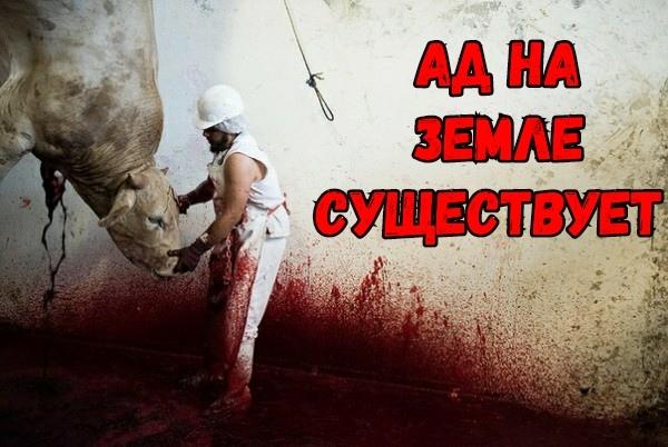 Ад на земле существует #ВЕГЕТАРИАНСТВО #ВЕГАН #ВЕГАНСТВО #ВЕГЕТАРИАНЕЦ #GoVegan #ХРИСТОЛЮБ — christolube.ru