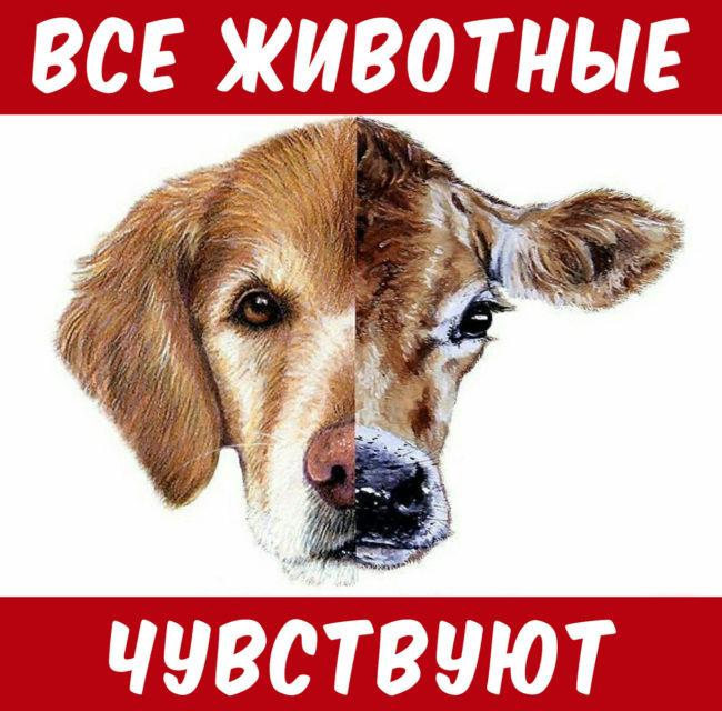 Почему мы едим одних животных и типа любим других 2 #ВЕГЕТАРИАНСТВО #ВЕГАН #ВЕГАНСТВО #ВЕГЕТАРИАНЕЦ #GoVegan #ХРИСТОЛЮБ — christolube.ru