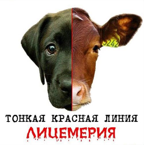 Почему мы едим одних животных и типа любим других #ВЕГЕТАРИАНСТВО #ВЕГАН #ВЕГАНСТВО #ВЕГЕТАРИАНЕЦ #GoVegan #ХРИСТОЛЮБ — christolube.ru