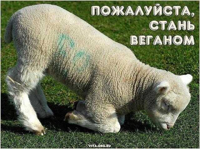Стань веганом #ВЕГЕТАРИАНСТВО #ВЕГАН #ВЕГАНСТВО #ВЕГЕТАРИАНЕЦ #GoVegan #ХРИСТОЛЮБ — christolube.ru